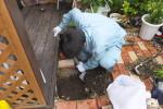 埋まった排水マス探し/屋外桝修理
