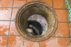 排水マス高圧洗浄通管後