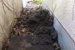 取り出した汚泥