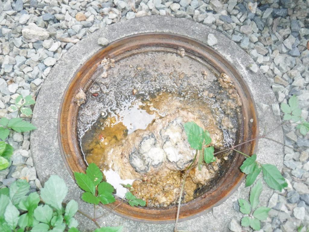 排水管が詰まりマスから溢れそうになっている状態