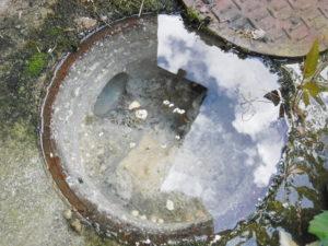 こちらも同じく排水管が詰まっているためマスで溢れています