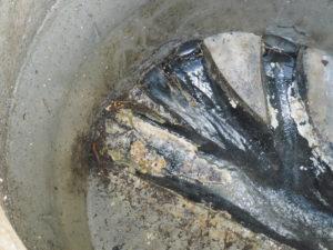 キッチン排水管から出てきた油の塊