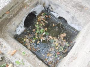 雨水会所の修理後、水が溜まり葉っぱ等プカプカ浮いています