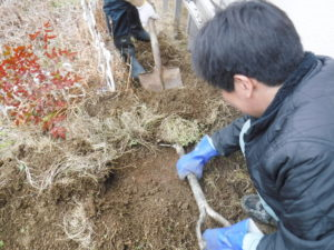 土掘り作業中