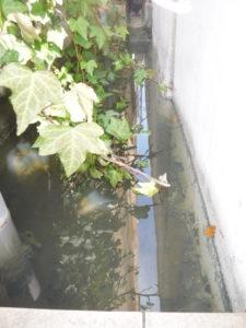 側溝の水たまり掃除前