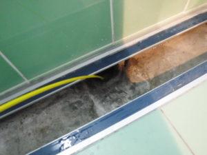 バスタブ排水溝の配管状態確認中