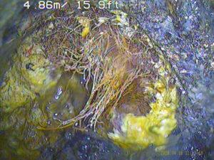 兵庫県芦屋市汚水マス溢れ逆流、排水管高圧洗浄木の根つまり解消、管内調査カメラ作業
