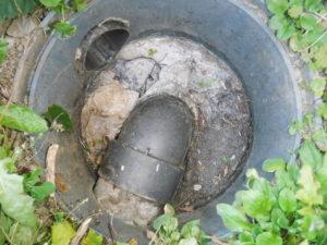 詰まって溢れている汚水マスの周辺のマスも、同じように詰まりかけていました