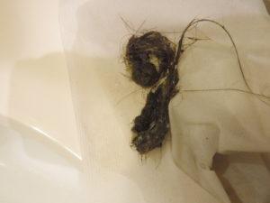 洗面台排水に溜まっていた髪の毛